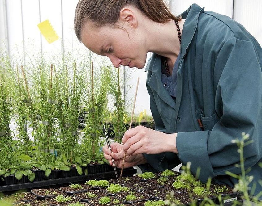 Ausbildung Botaniker