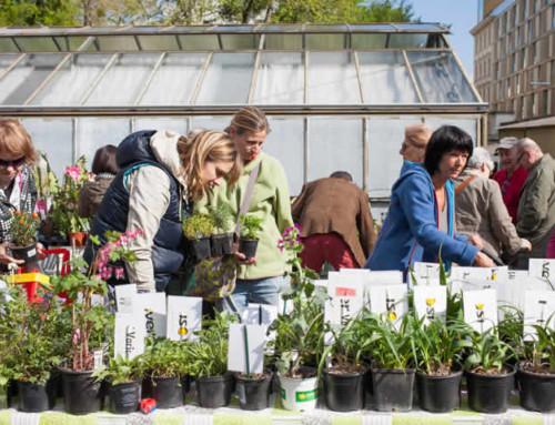 Außergewöhnliche Pflanzenraritäten im Botanischen Garten der Universität Wien