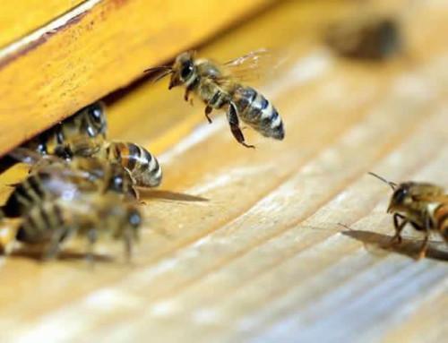 Smart City für Bienen: Universität Graz entwickelt High-Tech-Bienenstock