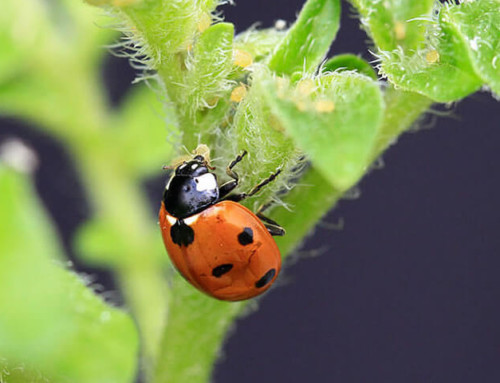 Artenvielfalt nutzt der Landwirtschaft