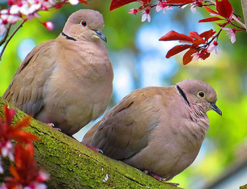 Die Schönheit der Tiere