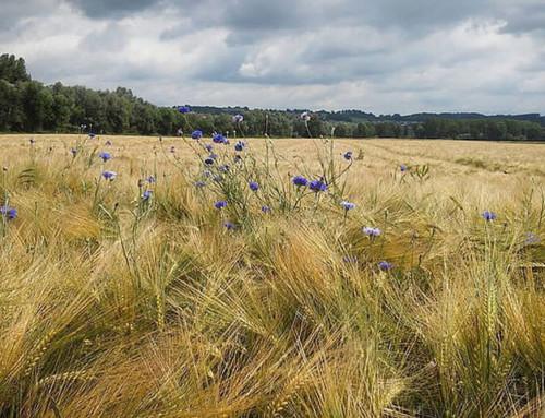 Klimawandel könnte Artenvielfalt der Alpen künftig stärker beeinflussen als Landwirtschaft